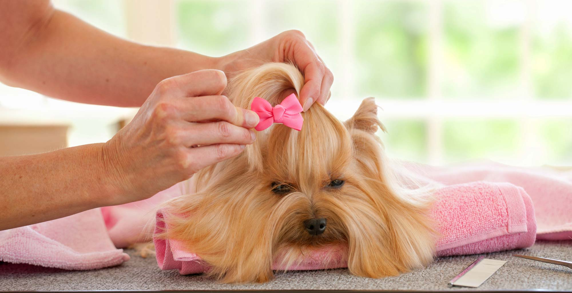 best mobile dog grooming near me – Behavioral Benefits of a Regular Schedule